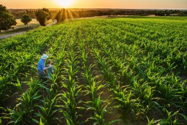 A farmer works in a sunny field lined with crops