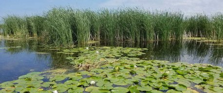 Duck habitat in the Green Bay watershed